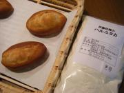 2009_04160008.JPG